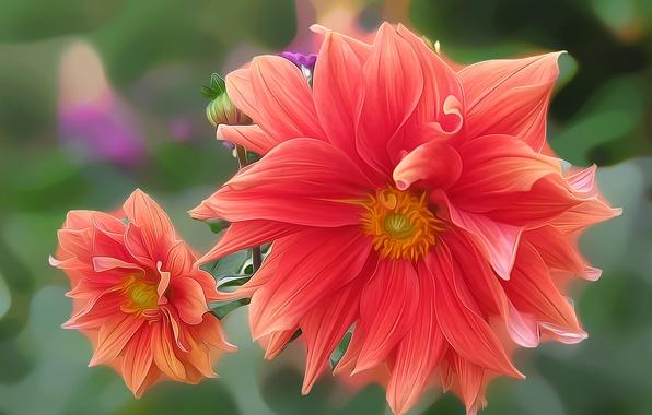 Picture flower, rendering, figure, vector, petals, garden, flowerbed