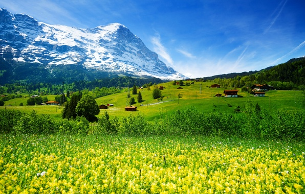 Picture greens, forest, grass, flowers, mountains, field, Switzerland, valley, glacier, houses