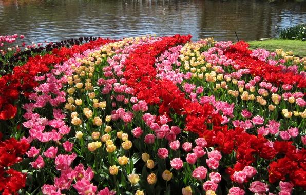 Picture pond, garden, tulips, Netherlands, colorful, Keukenhof Gardens