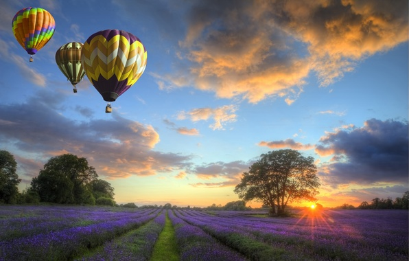 Picture the sky, clouds, landscape, sunset, nature, field, flowers, balloons