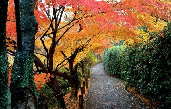 Picture autumn, leaves, trees, Park, Japan, garden, track, the bushes