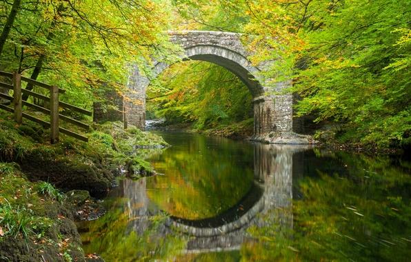 Picture autumn, forest, trees, bridge, reflection, river, England, arch, Devon, England, Devon, Dartmoor, River Dart, Dartmoor, …