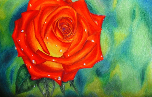 Picture drops, figure, rose, red, scarlet, Rose, Aileen