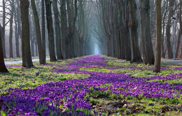 Picture trees, flowers, nature, Park, spring, crocuses, naked
