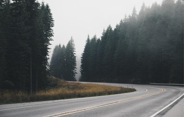 Picture road, forest, asphalt, track, spruce, ate, highway
