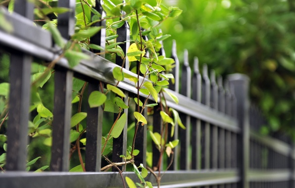 Picture summer, branches, the fence