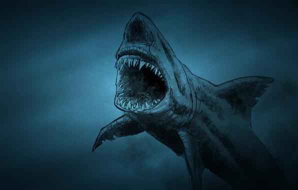 Picture fish, shark, shark, fish, toothy, dark background
