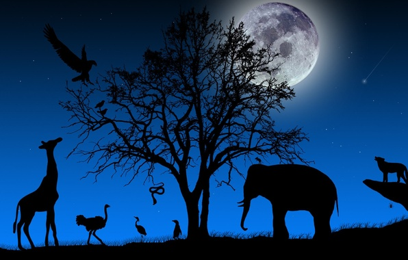 Picture TREE, The SKY, NIGHT, The MOON, STARS, BRANCHES, ELEPHANT, SNAKE, BIRDS, SHADOW, ANIMALS, SILHOUETTES, LANDSCAPE, …
