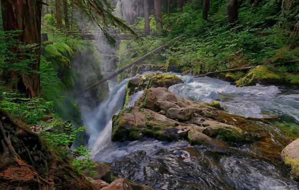 Picture forest, bridge, river, stones, waterfall, stream
