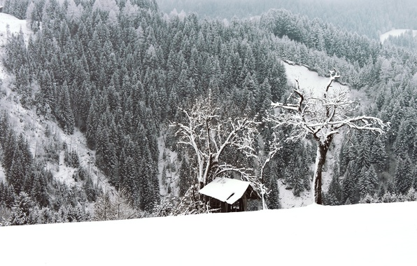 Picture winter, forest, snow, trees, frost, forest, Nature, trees, winter, snow, frost