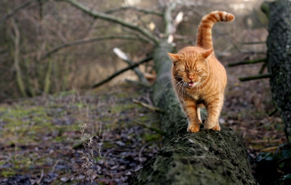 Picture cat, tree, red, yawns