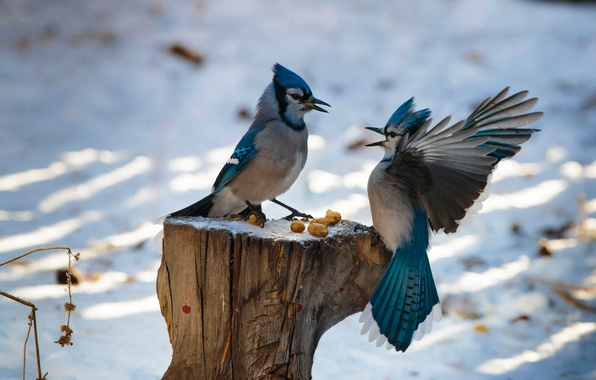Picture winter, birds, stump, wings, feathers