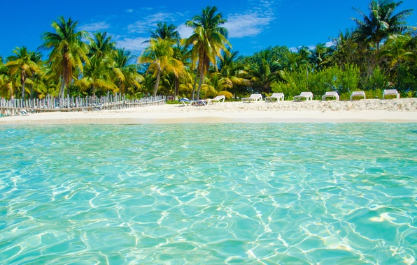 Picture sea, beach, tropics, palm trees, stay