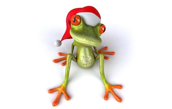 Picture frog, christmas, Santa, frog, funny, santa hat