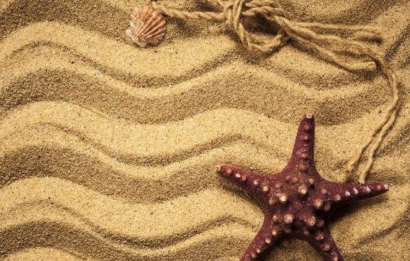 Picture sand, shell, starfish, beach, texture, sand, marine, starfish