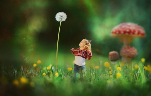 Picture joy, fantasy, dandelion, Amanita, child