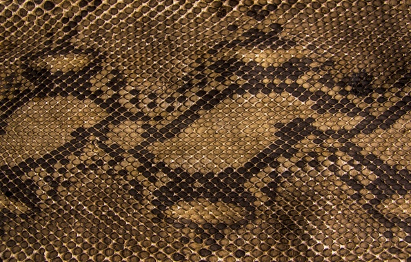 Picture snakes, texture, scales, leather