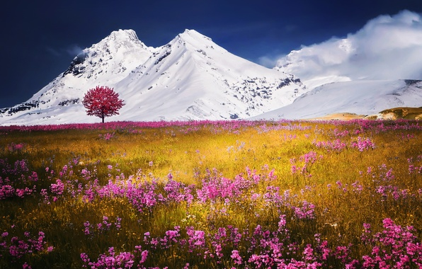 Picture field, snow, flowers, mountains, nature