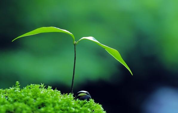 Picture green, nature, plant, zen