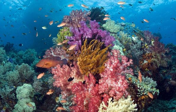 Picture sea, fish, fish, corals, Underwater world