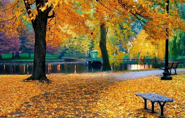 Picture autumn, trees, nature, pond, Park, foliage