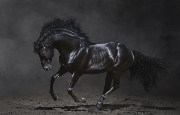 Picture the dark background, beauty, mane, black horse