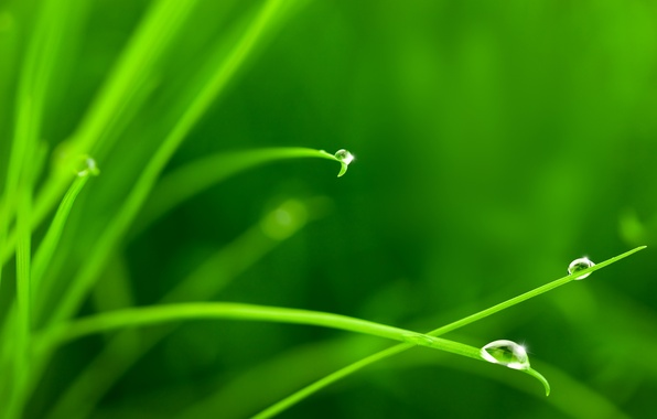 Picture greens, grass, water, drops, macro