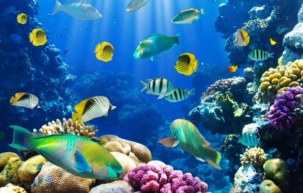 Picture fish, underwater world, underwater, ocean, fishes, tropical, reef, coral, coral reef