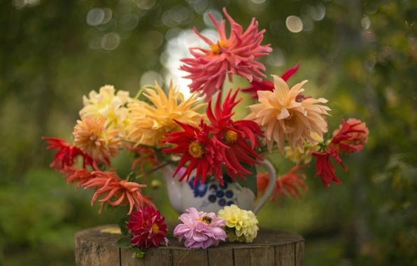 Picture bouquet, autumn, dahlias