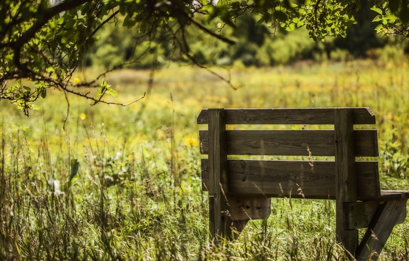 Picture field, summer, bench