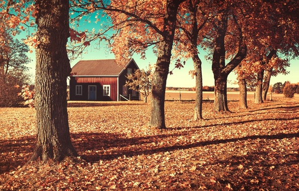 Picture field, autumn, leaves, trees, nature, house, house, orange