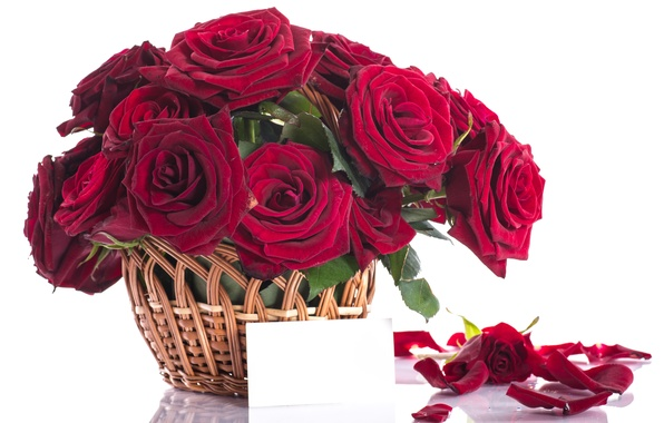 Picture flowers, red, roses, bouquet, petals