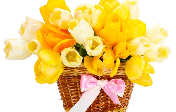 Picture basket, bouquet, yellow, tulips, bow
