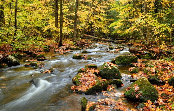 Picture autumn, forest, leaves, trees, river, stones, stream
