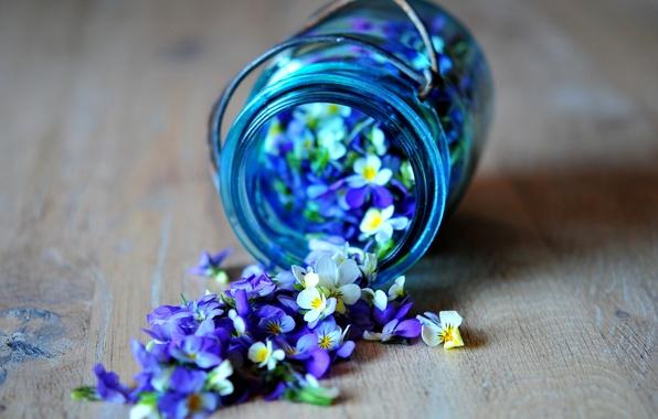 Picture flowers, blue, blue, petals, jar