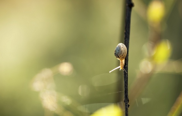 Picture summer, nature, snail