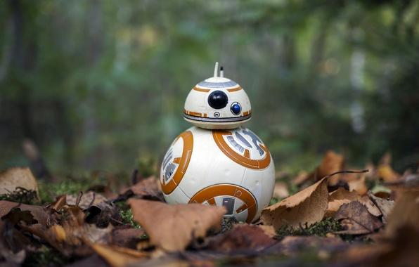 Picture Star Wars, autumn, BB-8