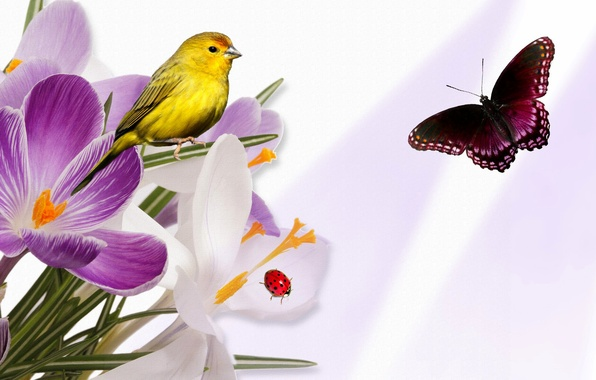 Picture flowers, collage, bird, butterfly, ladybug, Krokus