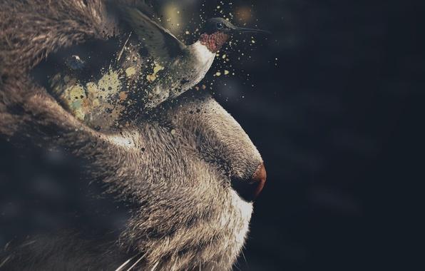 Picture cat, face, flight, background, Koshak, Hummingbird, bird, Tomcat