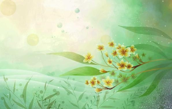 Picture flower, leaves, flowers, style, styling, art, white, white, flower, style, art, plumeria, frangipani, frangipani, Plumeria