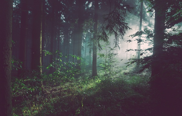 Picture dark, forest, trees, nature, bushes, woods, plants, shrubs
