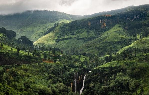 Picture greens, landscape, tropics, Sri Lanka