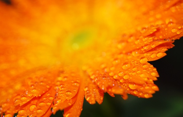 Picture drops, orange, petals