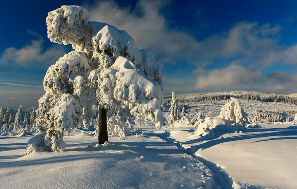 Picture winter, snow, trees, Germany, path, Germany, Black Forest, The black forest