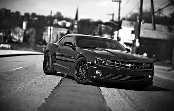 Picture auto, black and white, Chevrolet Camaro, chevrolet camaro ss