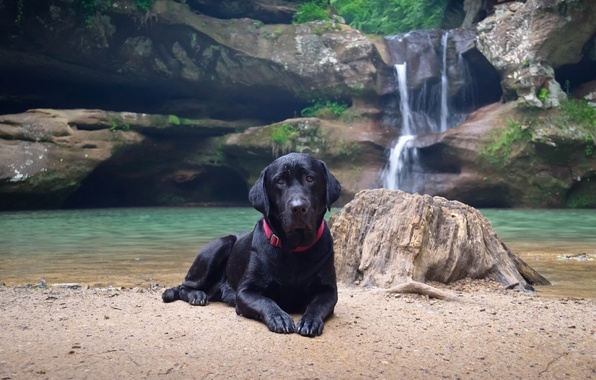 Picture water, nature, shore, waterfall, dog