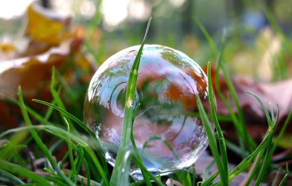 Picture Macro, Reflection, Photo, Grass, Leaves, Bubble, Park, Lawn, Soap