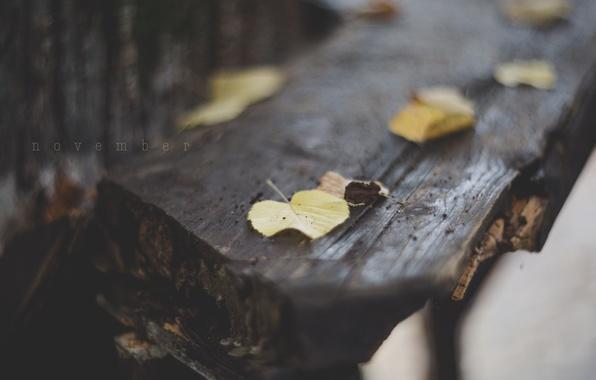 Picture leaves, macro, the inscription, foliage, November