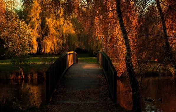Picture autumn, bridge, pond, Park, duck
