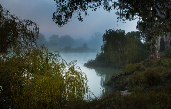 Picture misty morning, the Murray river, South Australia